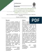 INFORME-III-MICROBIOLOGIA.docx