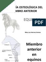 ANATOMÍA OSTEOLÓGICA DEL MIEMBRO ANTERIOR EQUINOS
