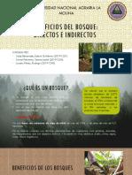 Beneficios del bosque