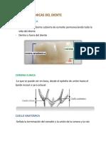 Anatomia Dental Parcial 3