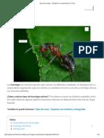 Tipos de hormigas - 10 Especies, Características y FOTOS.pdf