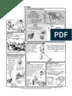 Buckwheat Science Factsheet