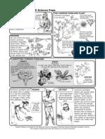 Purslane Science Factsheet