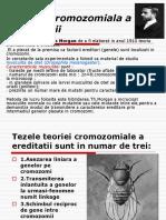 teoriacromozomialaaereditatii (1)