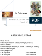 2. Integrantes de la colmena.pptx