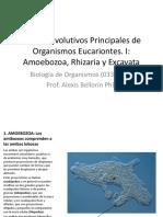 5 Grupos Organismos Eucariontes.pptx