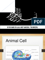 Presentation Animal