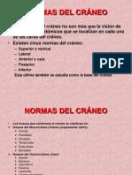 79969131-NORMAS-DEL-CRANEO