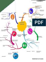 anatomia interna.docx