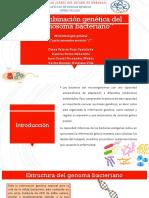 Recombinación genética del cromosoma bacteriano (1).pptx