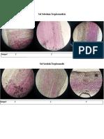 Pengamatan Plasmolisis.docx