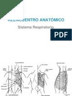 REENCUENTRO ANATÓMICO (Sistema Respiratorio).pptx
