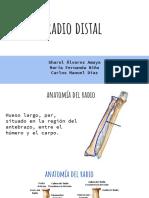ORTOPEDIA RADIO DISTAL