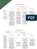 Actividad Invidual Mapas Conceptuales.docx