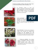 Gestion de Pisos_Unas horas en una floristería