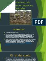 El suelo y los nutrientes
