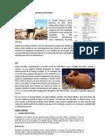 Animales_Peruanos
