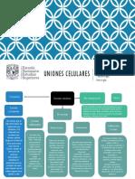 UNIONES CELULARES.pptx