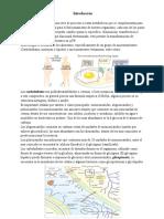 Carbohidratos y Lipidos-Info 2010