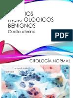 Citología fotos infeccionespptx