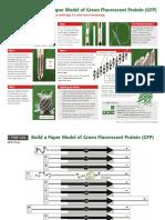 gfp-model