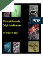 Clase_Crustaceos (1).pdf