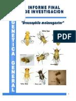 informe genetica de drosophila