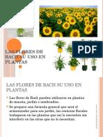 Flores de Bach su uso en plantas