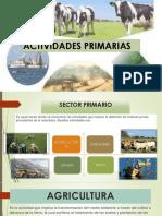 ACTIVIDADES PRIMARIAS PPT