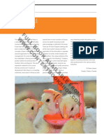 Chicken Nutrition A Guide for Nutritionists