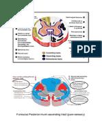 Bagaimana patofisiologi kejang