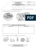 Actividades de refuerzo Ciencias Naturales 4 Ip.docx