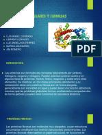 PROTEINAS GLOBULARES Y FIBROSAS.pptx