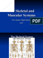 The+Skeletal+and+Muscular+Systems[1]