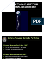 anatomia_do_cérebro_I