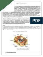 Investigación Célula Eucariótica