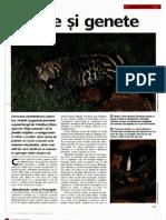 Arborele Lumii - Animale - Civete Si Genete