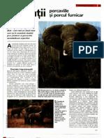 Arborele Lumii - Animale - Elefantii