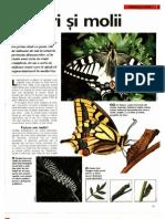 Arborele Lumii - Animale - Fluturi Si Molii