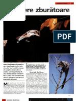 Arborele Lumii - Animale - Mamifere Zburatoare