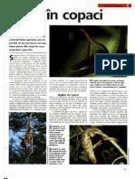 Arborele Lumii - Animale - Viata in Copaci