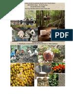 I_Maués_Introdução e Contextualização do Extrativismo e o  Meio Ambiente.