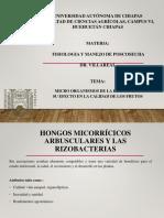 JARED MICRO ORGANISMOS DE LA RIZOSFERA EN POST COSECHA