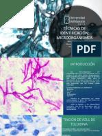 Técnicas de Id de Microorganismos.pptx