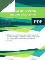 Equipo 7 Células Sistema Inmune Adaptativo  FTP02A 20-2