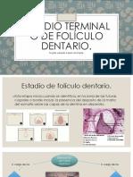 Estadio terminal o de folículo dentario