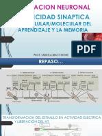 Plasticidad Sinaptica AFM Cba