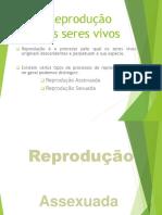 Rep_Assesxuada_1.pptx