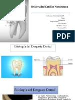 Etología del desgaste dental mi expo
