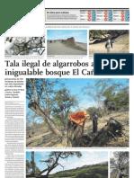 Tala ilegal de algarrobos amenaza inigualable bosque El Cañoncillo